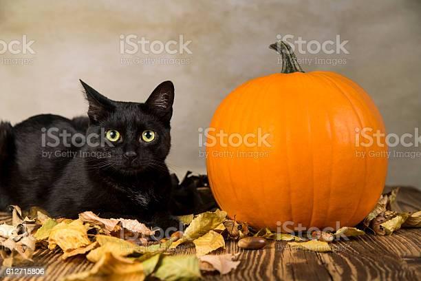 Black cat with pumpkin as a symbol of halloween picture id612715806?b=1&k=6&m=612715806&s=612x612&h=cbc ep vnufgfa03acdj nwgifz03vbgzjuh2q5j sa=