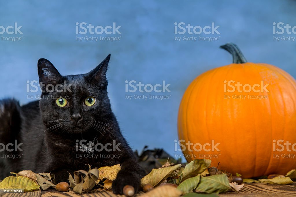 Black Cat With Pumpkin As A Symbol Of Halloween Stock Photo More