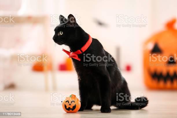 Black cat with red bow tie and plastic pumpkin picture id1178013449?b=1&k=6&m=1178013449&s=612x612&h=znkx2kubvtiinyl9g4kxp 4il90prcuzztz5iix5x w=