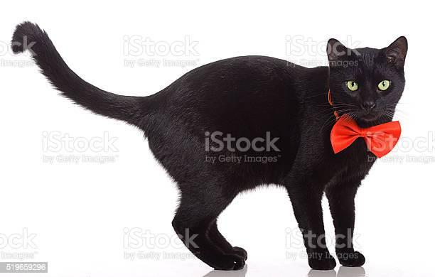 Black cat with red bow tie picture id519659296?b=1&k=6&m=519659296&s=612x612&h=l00bd2t0nghm n4e1iqjp3fff 2zvnkodabkh8fihwu=