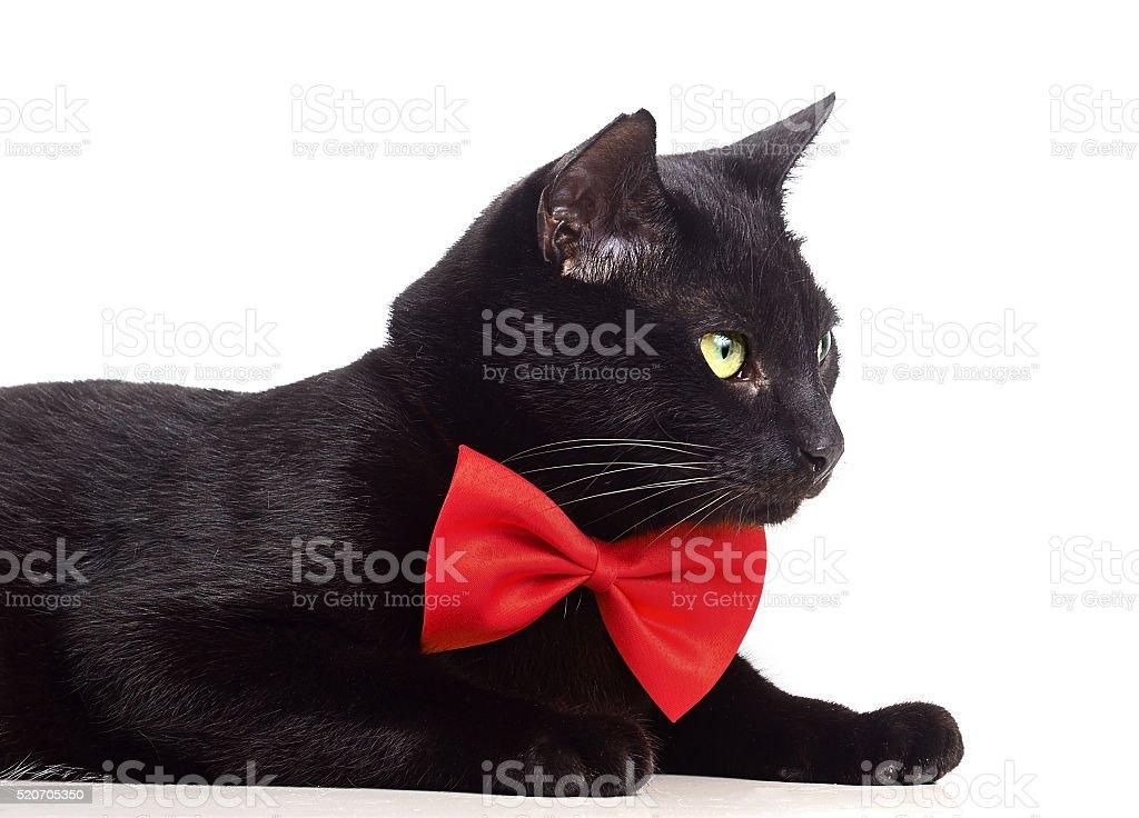 Gatto Nero Con Fiocco Rosso Fotografie Stock E Altre Immagini Di