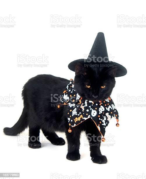Black cat with witch hat and halloween bib picture id153779860?b=1&k=6&m=153779860&s=612x612&h=xqtdczof2bs4ulips30f7g5mqes0e8qlqt6hvpb8ygm=