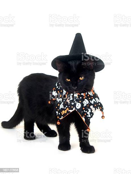 Black cat with witch hat and halloween bib picture id160122858?b=1&k=6&m=160122858&s=612x612&h=j1uqzan84dg3l7vkhdgv5fl w1l3c qrzngy v  pdy=