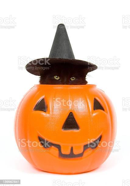 Black cat with witch hat in jack o lantern picture id139962641?b=1&k=6&m=139962641&s=612x612&h=hrhmyabzvfylnljwwkpanqkhphoiulscrtil2guojrk=