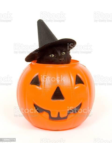 Black cat with witch hat in jack o lantern picture id139962774?b=1&k=6&m=139962774&s=612x612&h=sycj6kdrbtg0xatyjngytfc1yzixf2ijx9ejihr kvg=