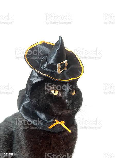 Black cat with witch hat picture id153165714?b=1&k=6&m=153165714&s=612x612&h=xblv3dndp3hbn16fvmrqzzzqxtxxuctssljdddzgmnc=