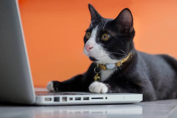 schwarze katze als entwickler online am computer arbeiten - suche katze stock-fotos und bilder