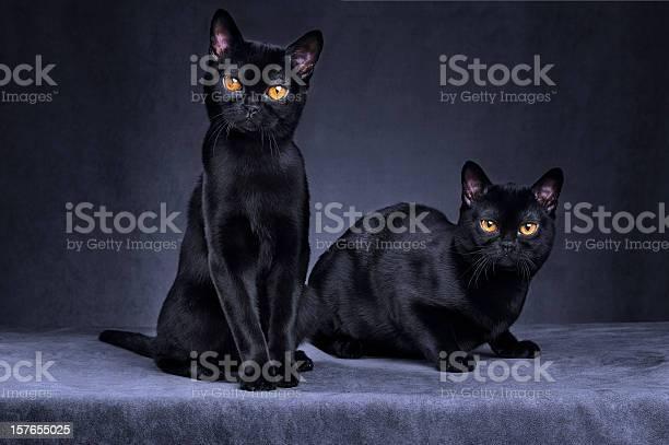Black cats picture id157655025?b=1&k=6&m=157655025&s=612x612&h=7bhg0bza xcw0lbvq6bwk3cgljzkgy3cdgisnzlhgwq=