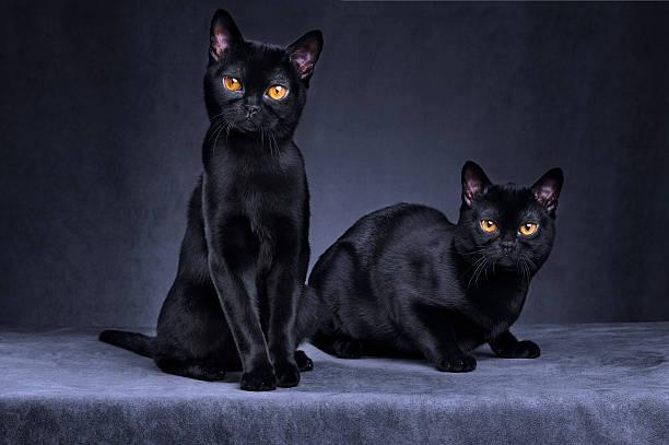 black cats - mumbai stockfoto's en -beelden