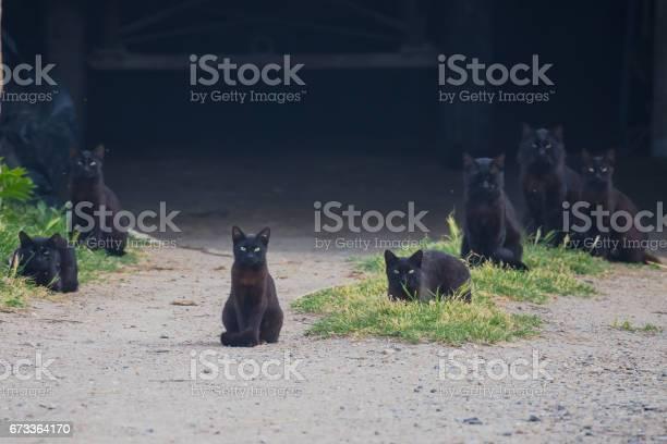 Black cats picture id673364170?b=1&k=6&m=673364170&s=612x612&h=dkpqjrz21ylgbfmkknvxunj5487db3zrcd2d4rjhr6s=