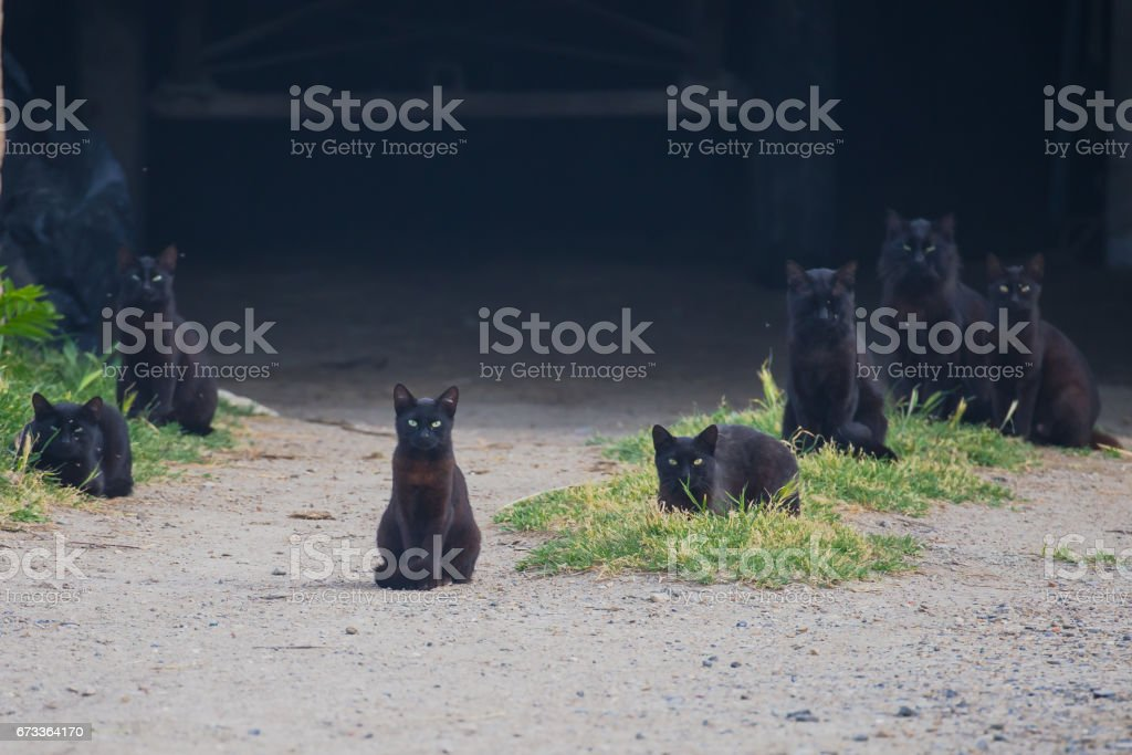 Black cats stock photo