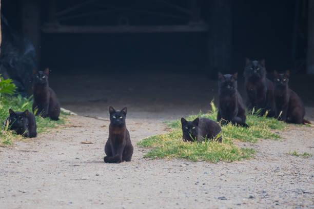 Black cats stock photo