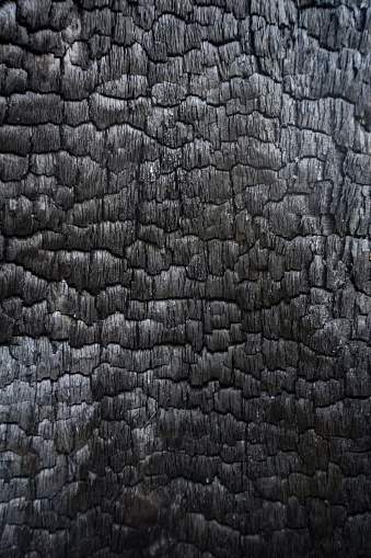 Black charred wood log interior burned in a forest fire, vertical aspect