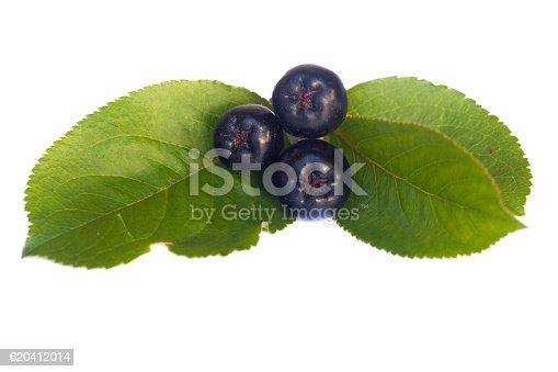 istock black chokeberries 620412014