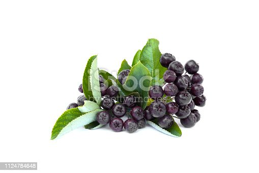 istock Black Chokeberries( Aronia Melanocarpa) with leaves isolated on white background. 1124784648