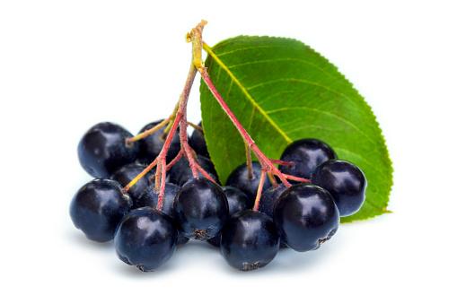 Black Chokeberry Bunch