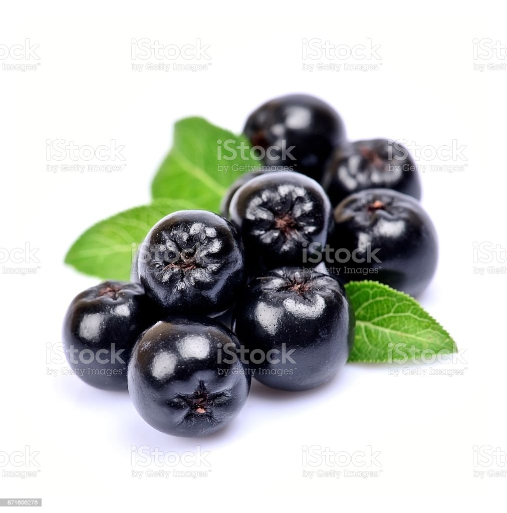 Black chokeberry close up stock photo