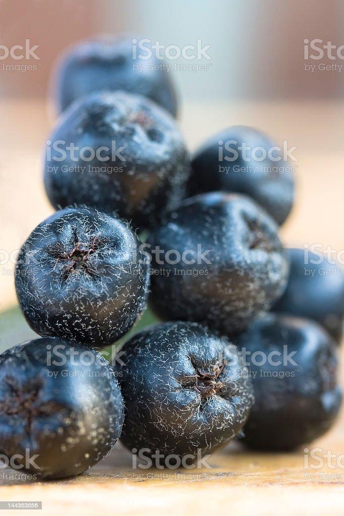 Black chokeberry stock photo