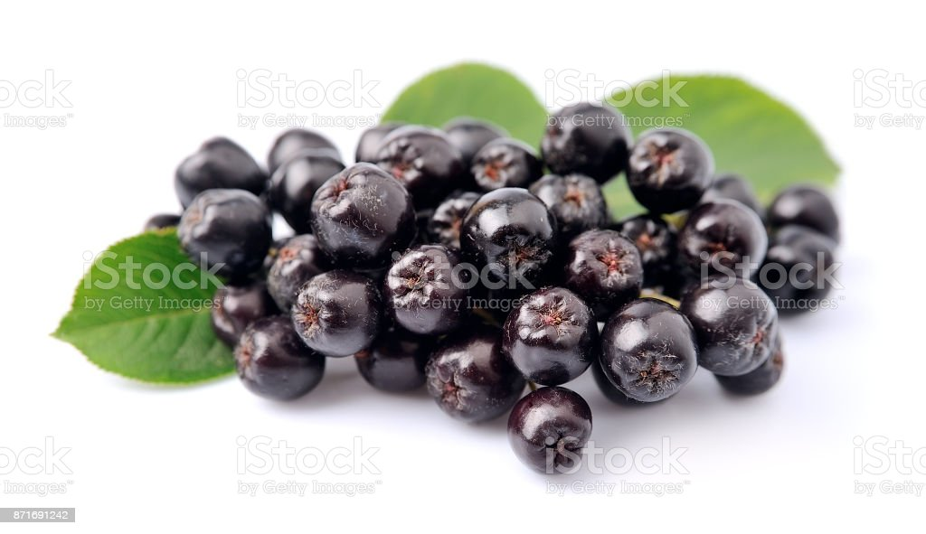 Black chokeberry with leaves stock photo