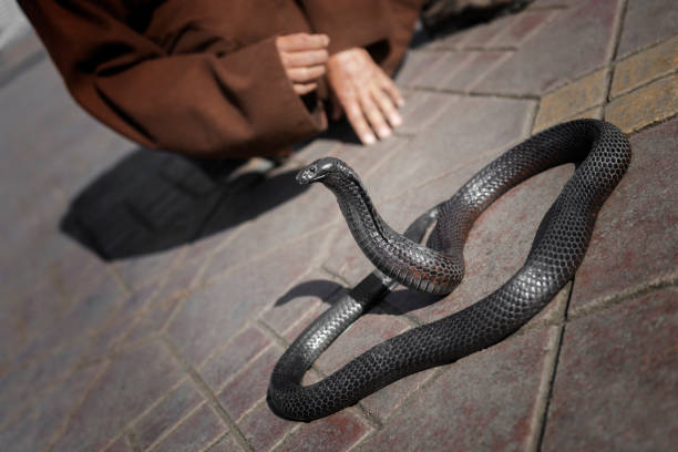 Black cobra snake with snake charmer detail in the background at Djemaa el Fna in Marrakech, Morocco stock photo