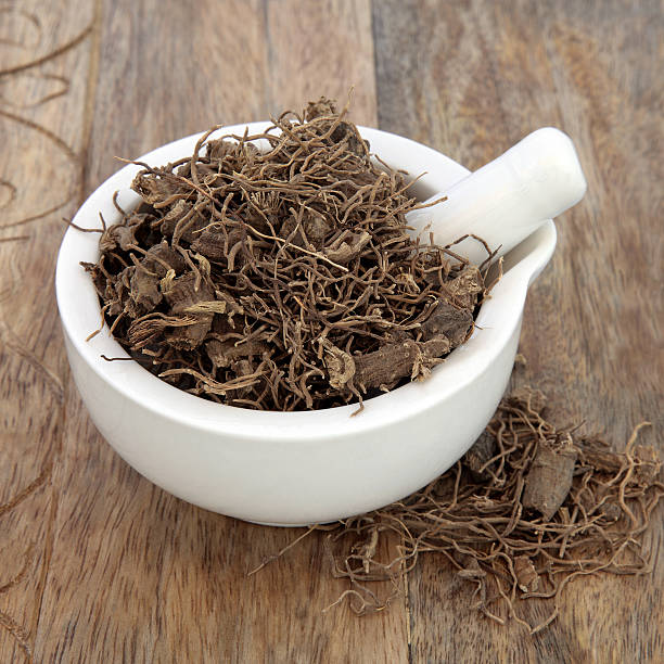 Black Cohosh Root Herb Black cohosh root herb used in natural alternative herbal medicine over old wood background. Used to treat menopausal and pre menstrual symptoms in women. Actaea racemosa. corn lilly stock pictures, royalty-free photos & images