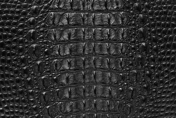 "Black Crocodile skin textures background This image of Freshwater Crocodile ""Crocodylus siamensis"".This skin is very classic and beauty. caiman stock pictures, royalty-free photos & images"