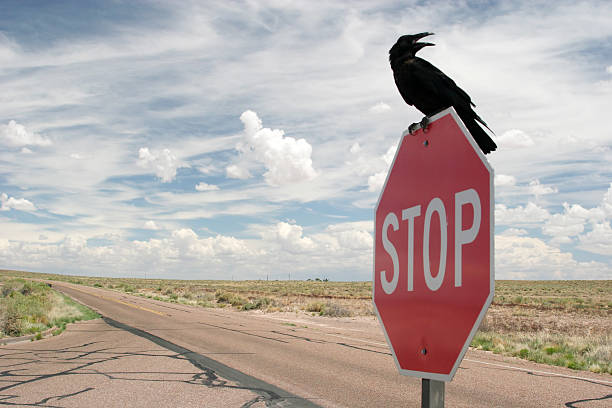 Black crow on stop sign stock photo