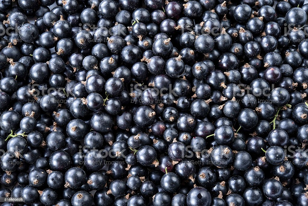 Black currant background stock photo