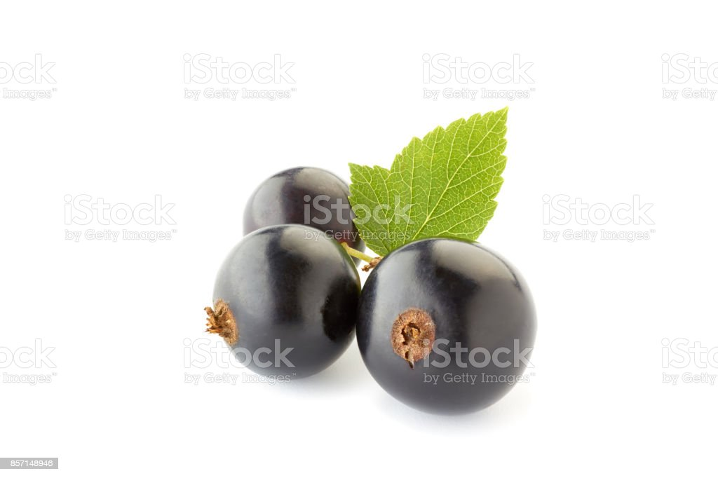 Black currant berries with leaves on white stock photo