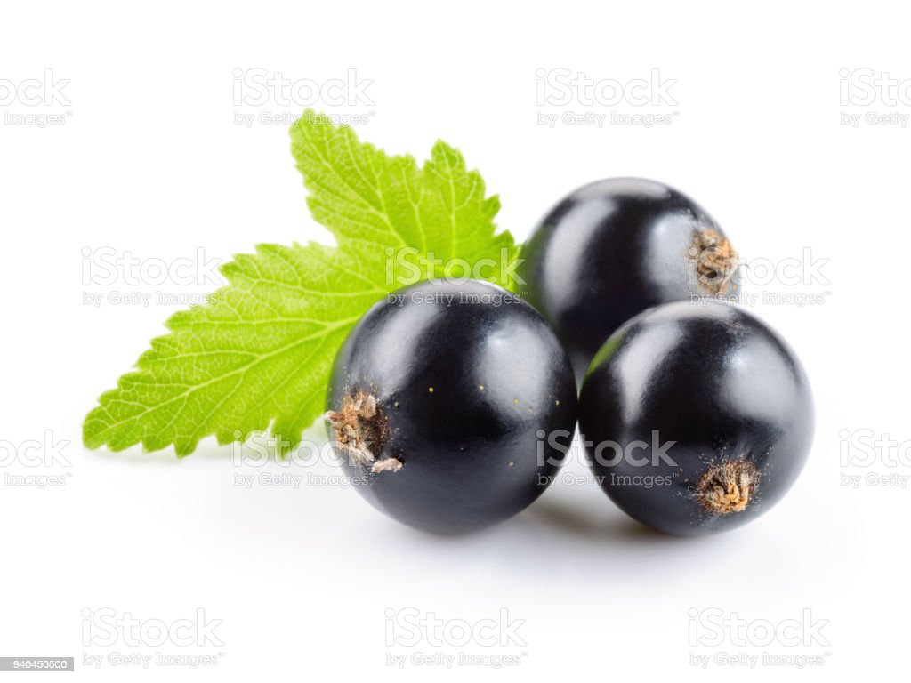 Black currant isolated. Currant with leaf on white background. stock photo
