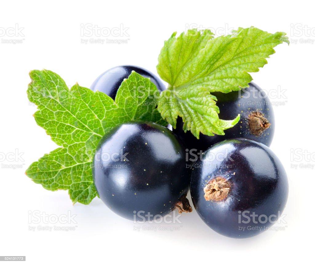 Black currant isolated on white background stock photo