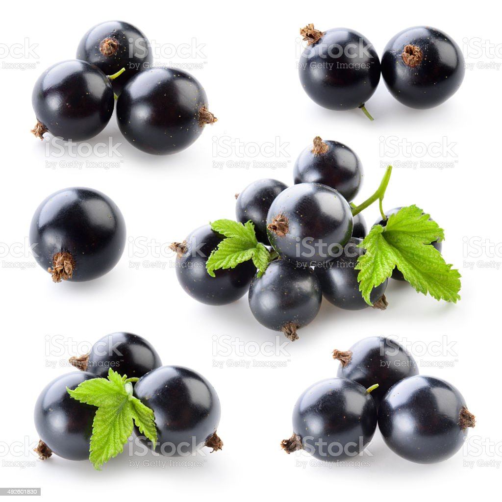 Black currant isolated on white. Collection stock photo