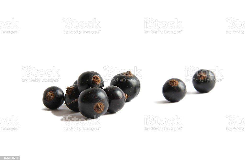 Black currant, isolated on white stock photo