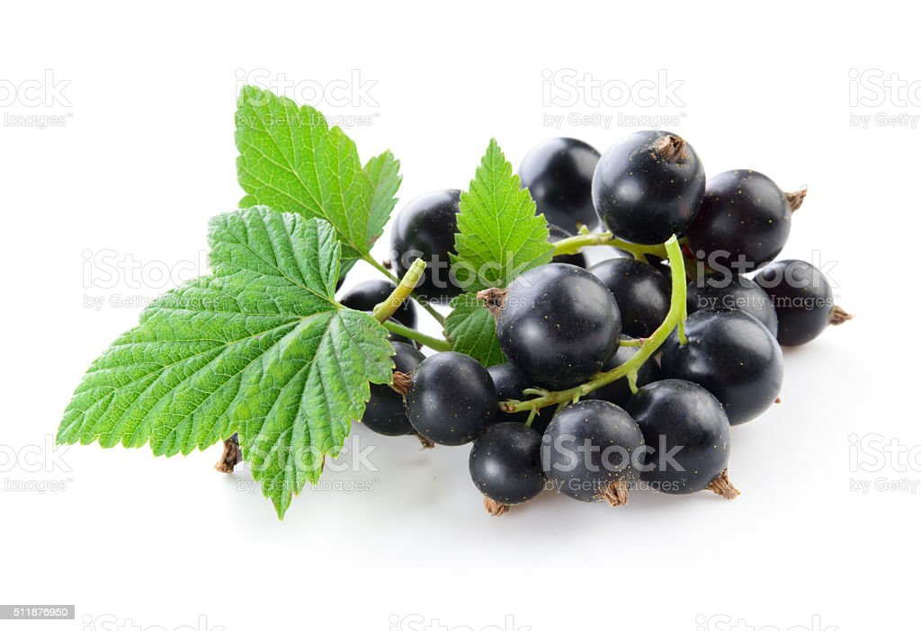 Black currant isolated on white. stock photo