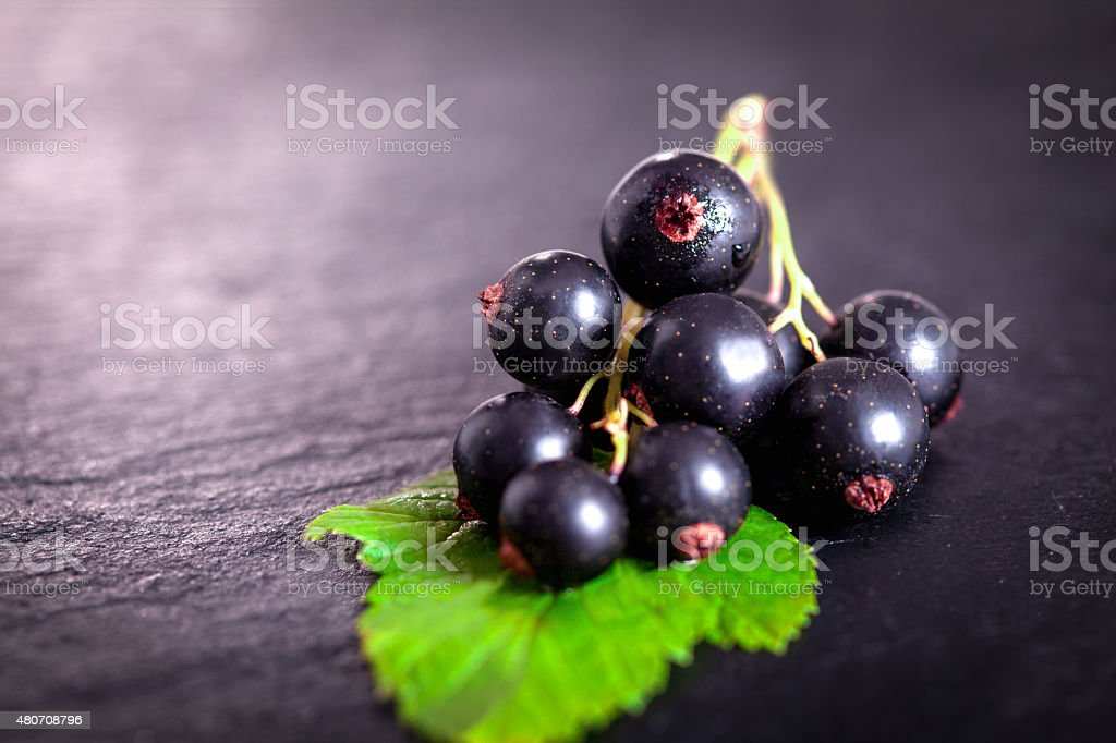 Black currant on green leaf stock photo