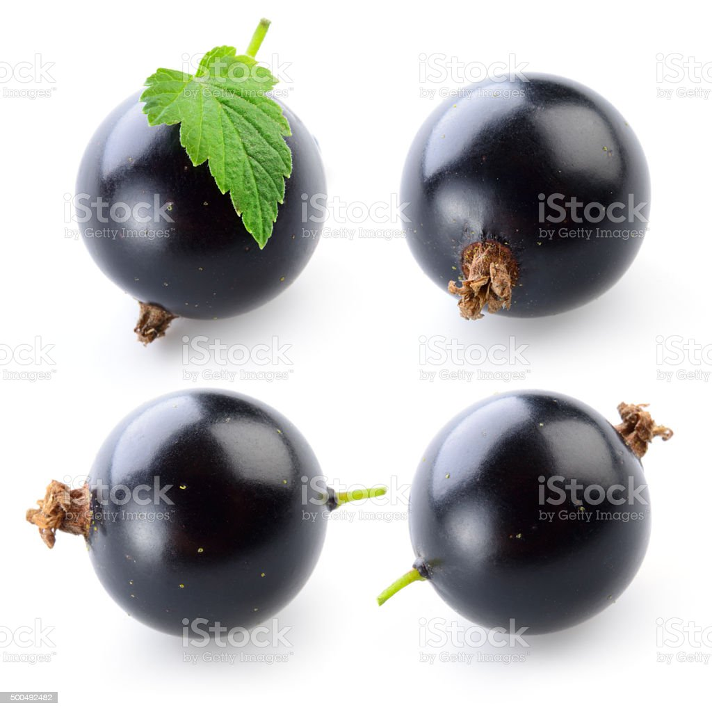 Black currant on white. Collection stock photo