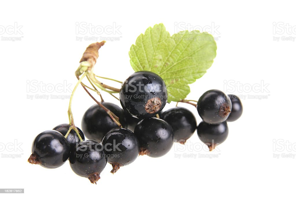 black currant panicle stock photo