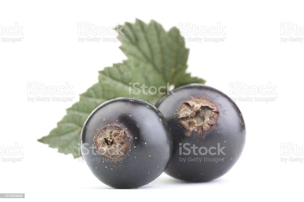 Black currant royalty-free stock photo