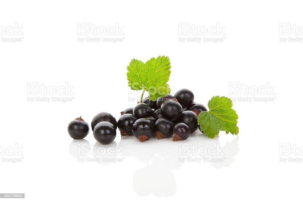 Black currant. stock photo