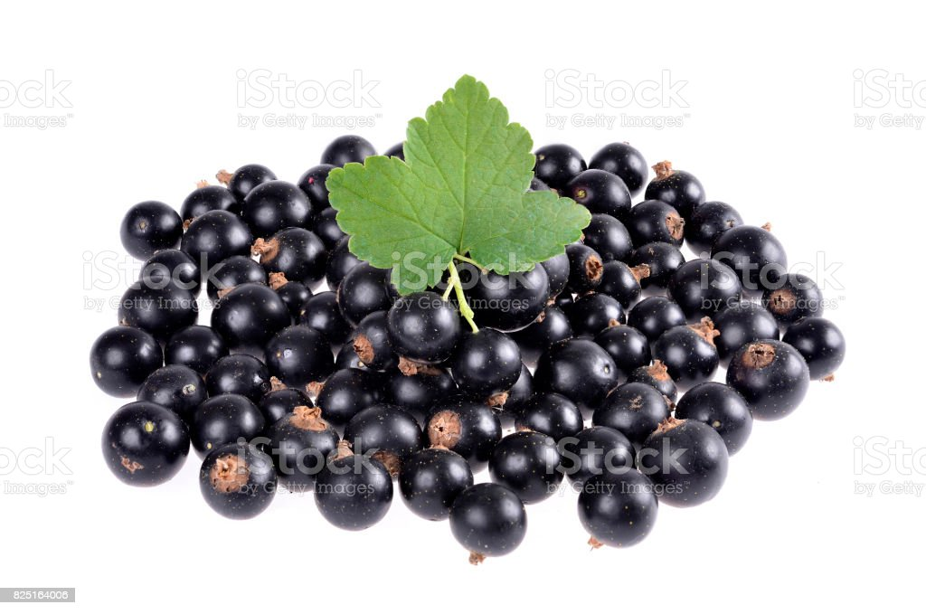 Black currant with green leaf isolated stock photo