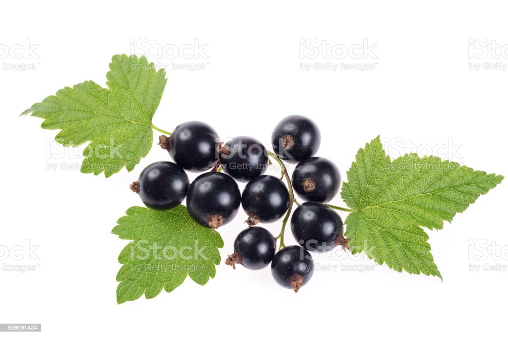 black currant with leaves isolated on white background stock photo