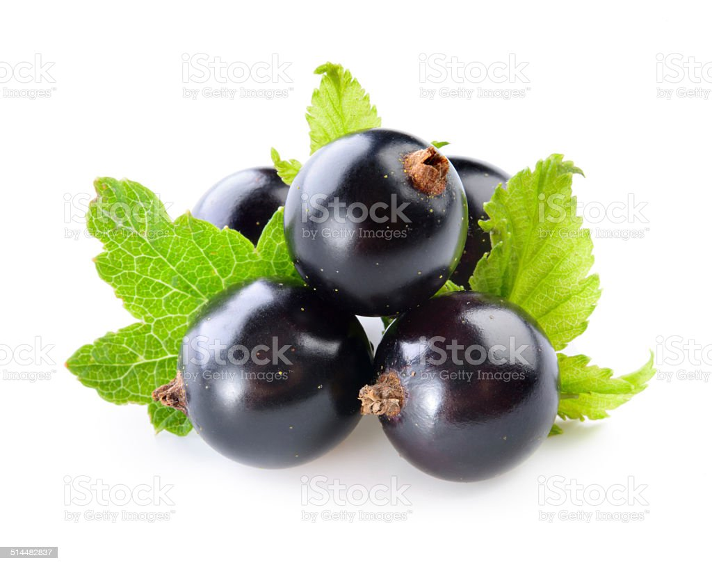 Black currant with leaves isolated stock photo