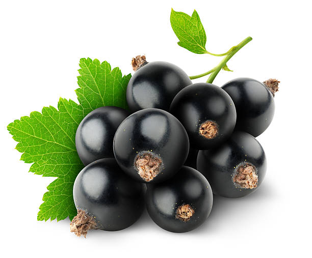 Black currants and leafs over white background stock photo