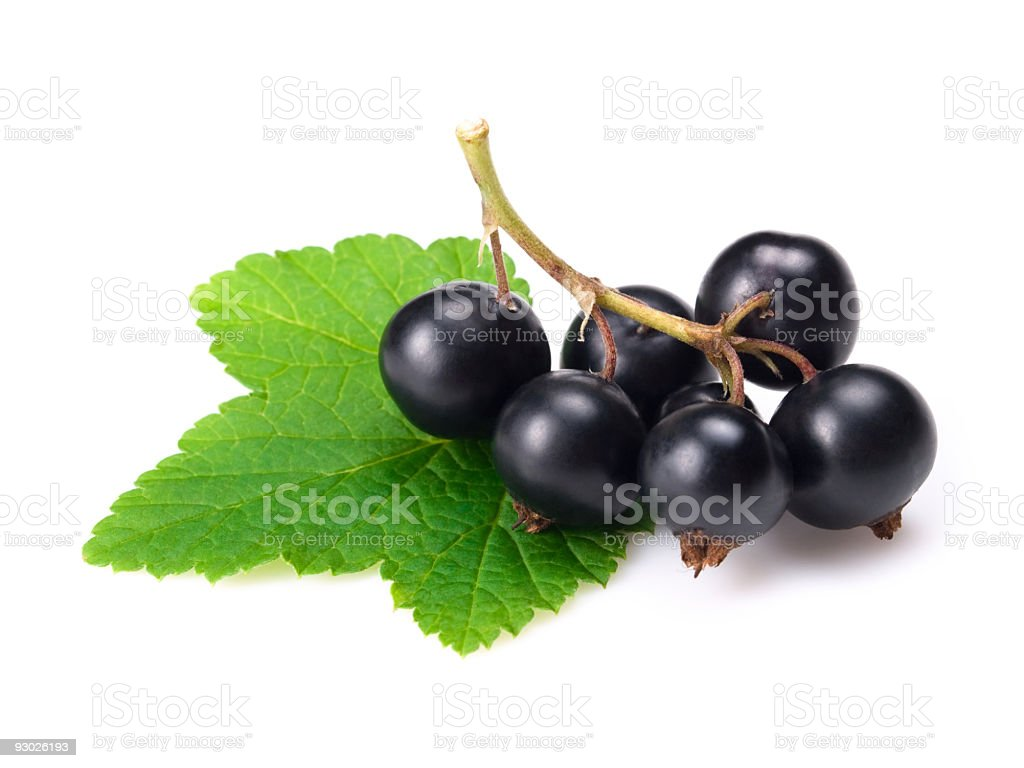 black currants w clipping path royalty-free stock photo
