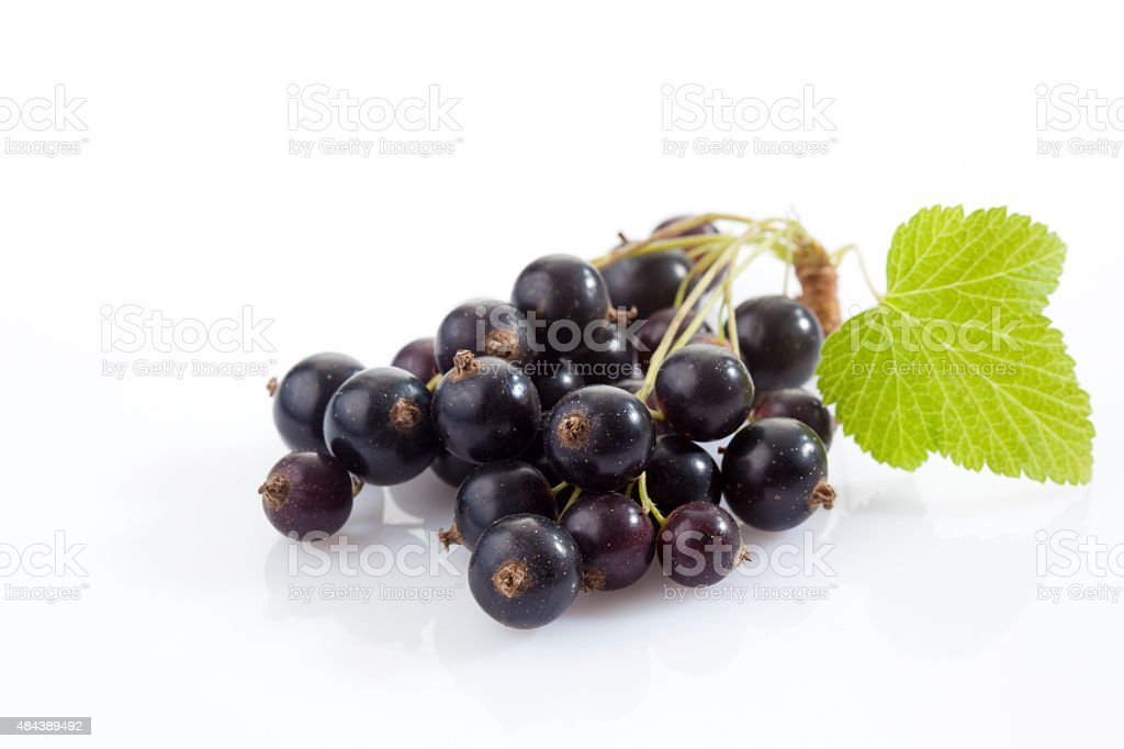 Black currants, white background stock photo