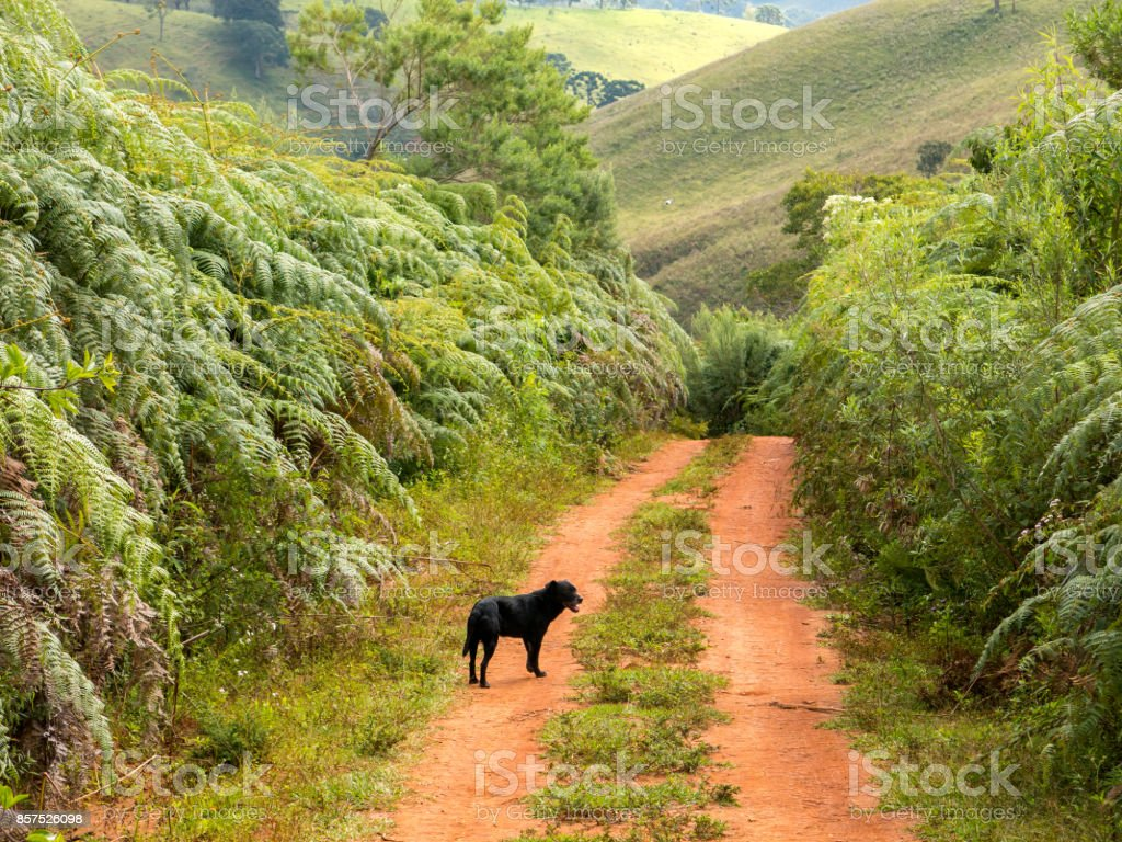 Black dog in a dirt rural road stock photo