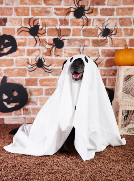 schwarzer hund im geisterkostüm - geist kostüm stock-fotos und bilder