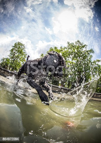 istock Black dog is jumping in the water 854972094