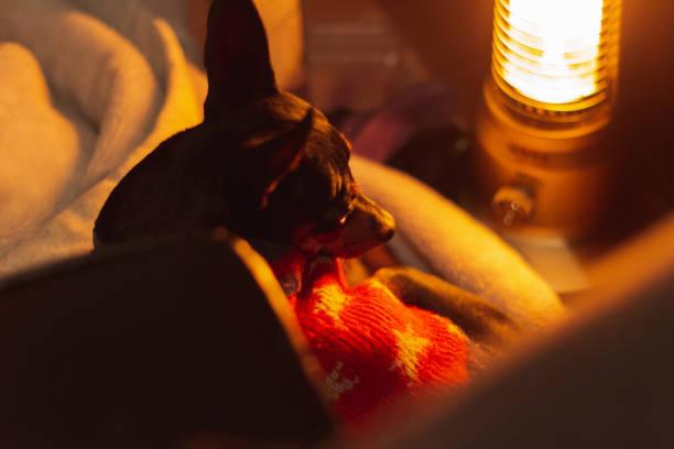 黒い犬は、夜の冬に電気ヒーターの前に横たわっています ストックフォト