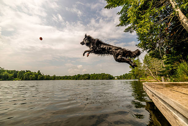 Black dog jumping into lake after ball picture id618635080?b=1&k=6&m=618635080&s=612x612&w=0&h=hb1yoaetqnupoy03h2mdxybfjqgz6zaovitygewewj0=